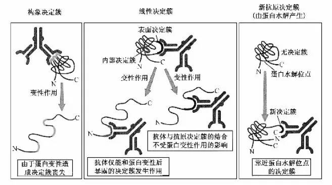 抗原抗体特异性结合_抗原介绍--从六个方面完整阐述抗原 - 上海儒百生物科技有限公司